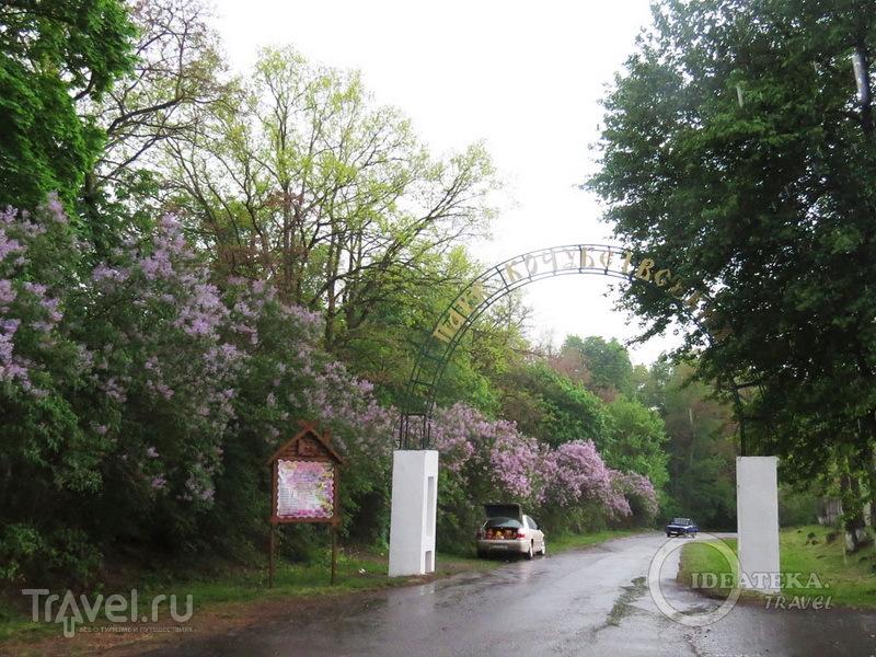 Сиреневый сад в Диканьке / Фото с Украины