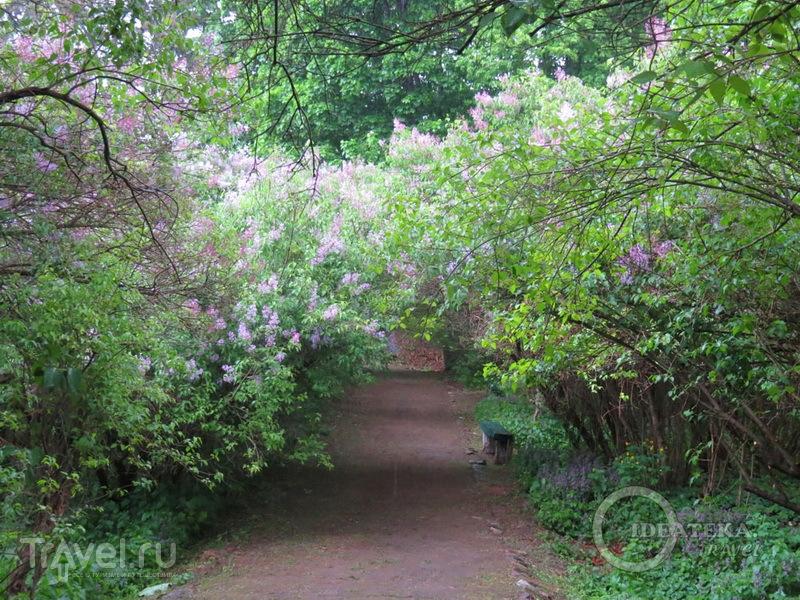 На аллее Сиреневого сада в Диканьке / Фото с Украины