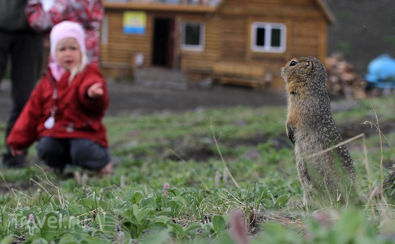 Камчатка. Фотографируем евражек / Россия
