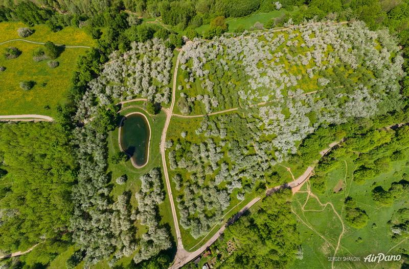 Яблоневые сады с высоты / Фото из России