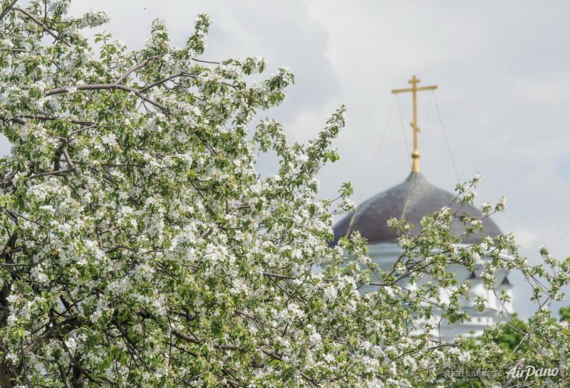 Яблоня и купол церкви Усекновения Главы Иоанна Предтечи в Дьякове / Фото из России