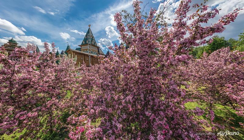 Яблони и воссозданный деревянный дворец царя Алексея Михайловича / Фото из России