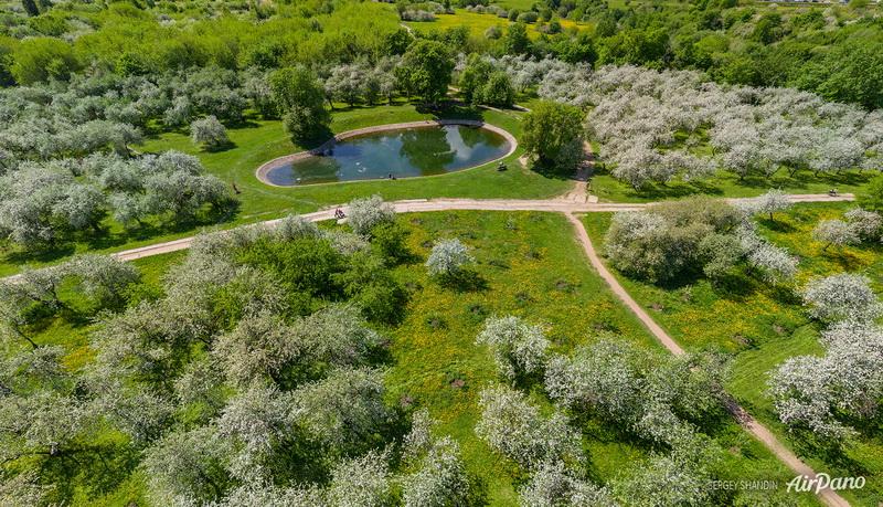 Дьяковский яблоневый сад / Фото из России