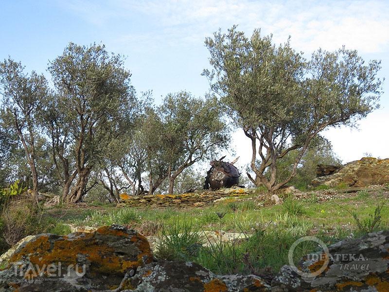 Оливковый сад Сальвадора Дали / Фото из Испании