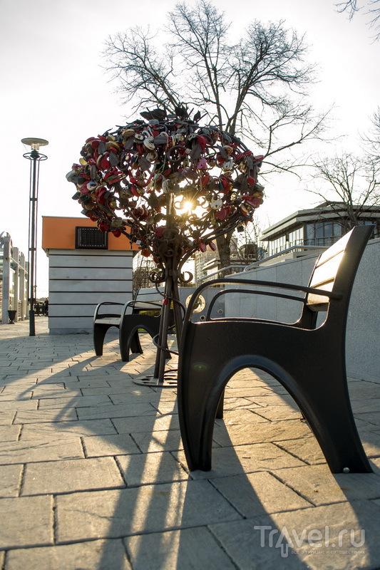 Деревца на набережной