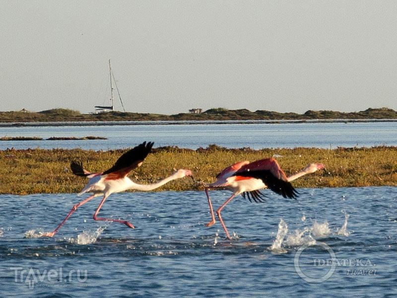 Фламинго в ноябре на Джербе / Фото из Туниса